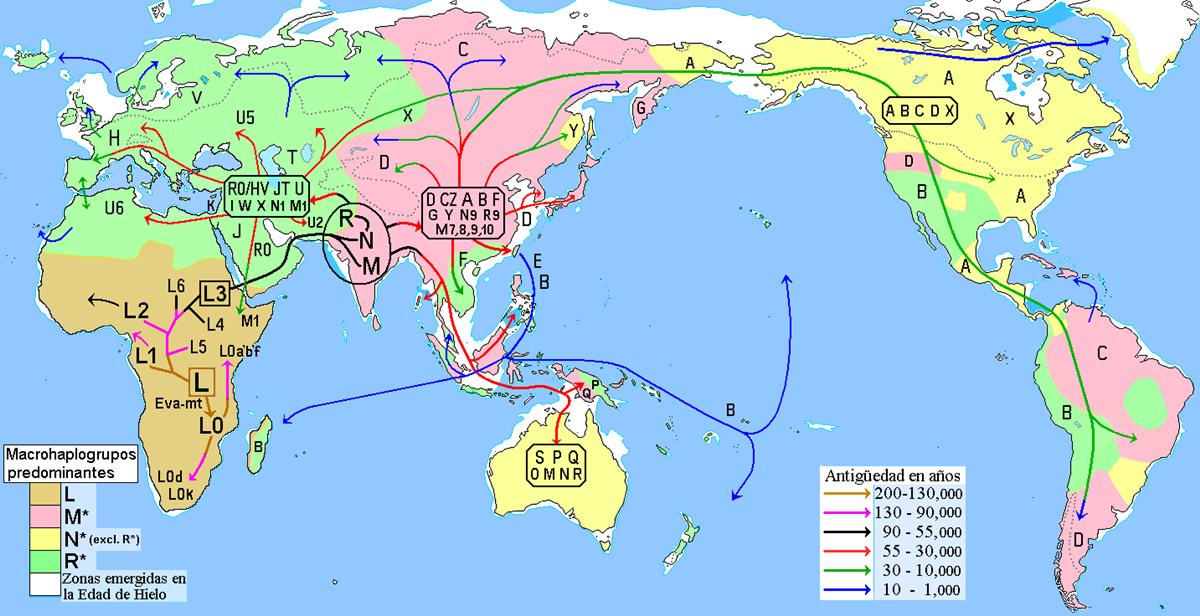 Migraciones_humanas_en_haplogrupo_2