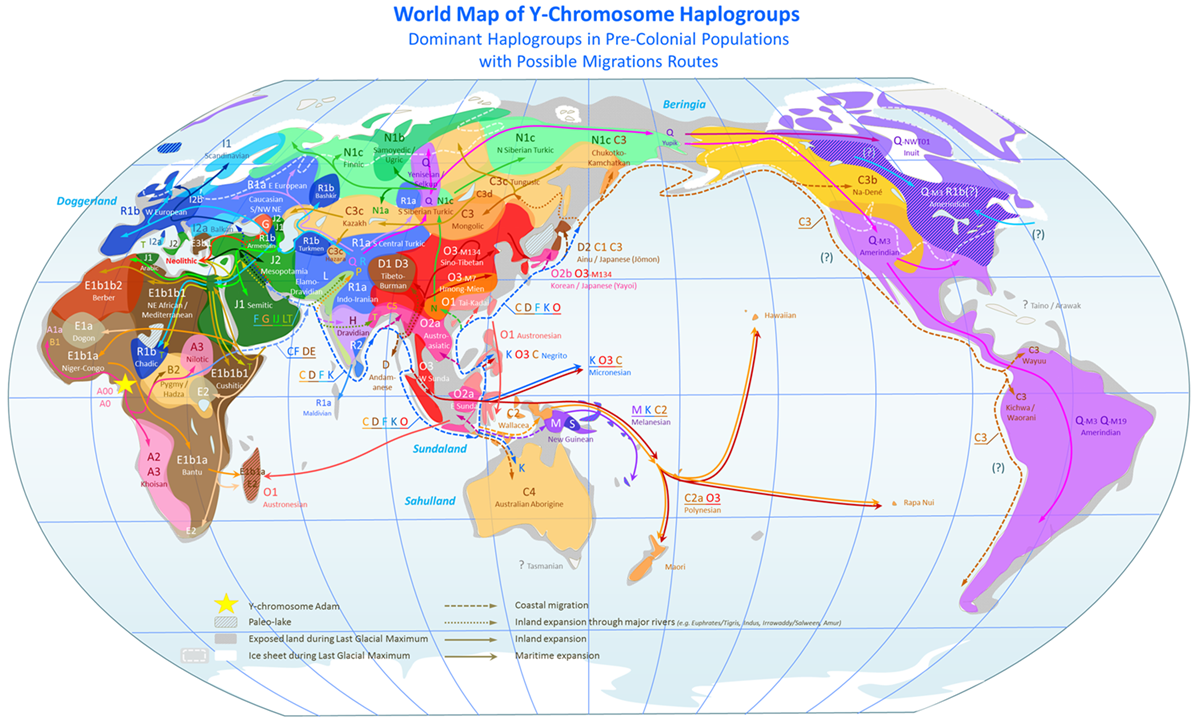 World_map_of_ydna_haplogroups